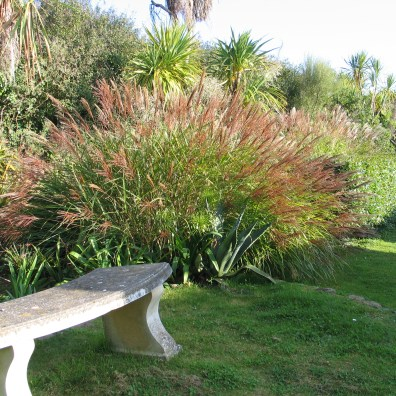 The long border behind the italian garden is given a rhythm by the palms