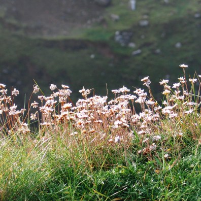 The softly fading foliage of the cliffs now