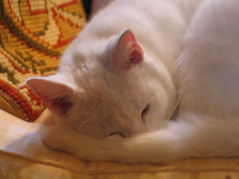 Spud-Cat enjoying a comfortable snooze
