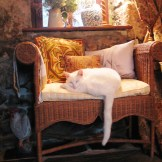 A Vintage Laura Ashley window seat is just purrfect Sud Cat spot to snooze away the showers