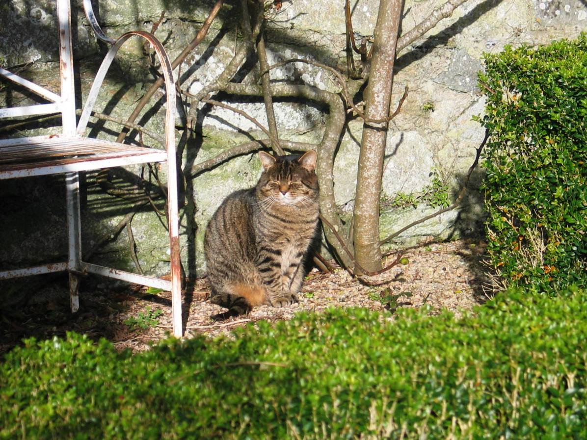 Wilbur enjoys the sheltered formal layout for winter sun bathing spots