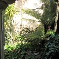 Plant shadows
