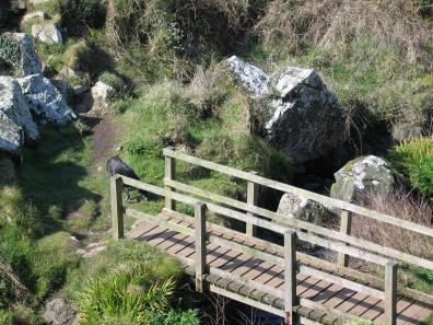 coastal footpath zennor to Gurnard's head