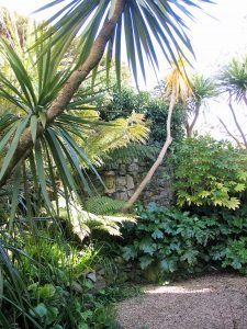 sub tropical planting in cornwall courtyard