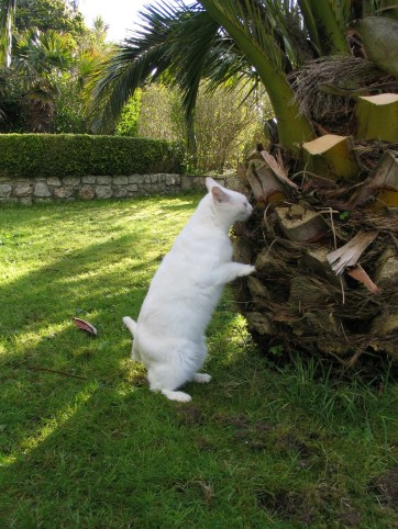Spud inspecting the Date palms