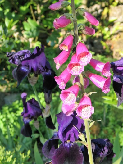 cottage garden planting for summer