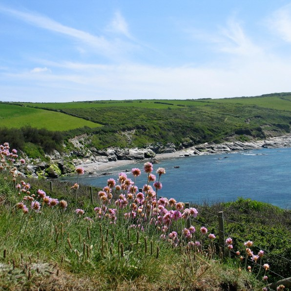 Spring walk along the coastal footpath east of Perranuthnoe
