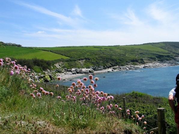 Spring walk along the coastal footpath east of Perranuthnoe