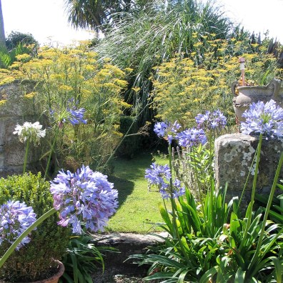 In July Agapanthus frame the entrance to the sundial garden