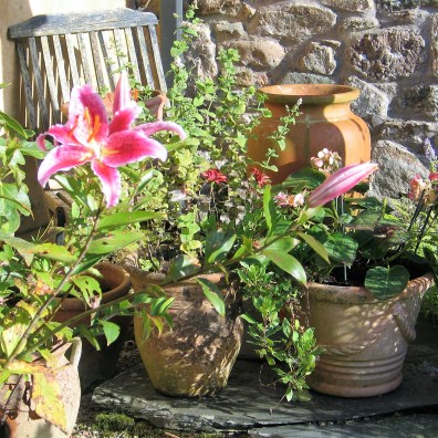 A courtyard corner of pots of lillies