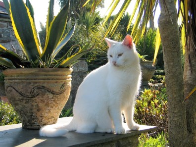 white cat sitting beside agaves in terracotta posts