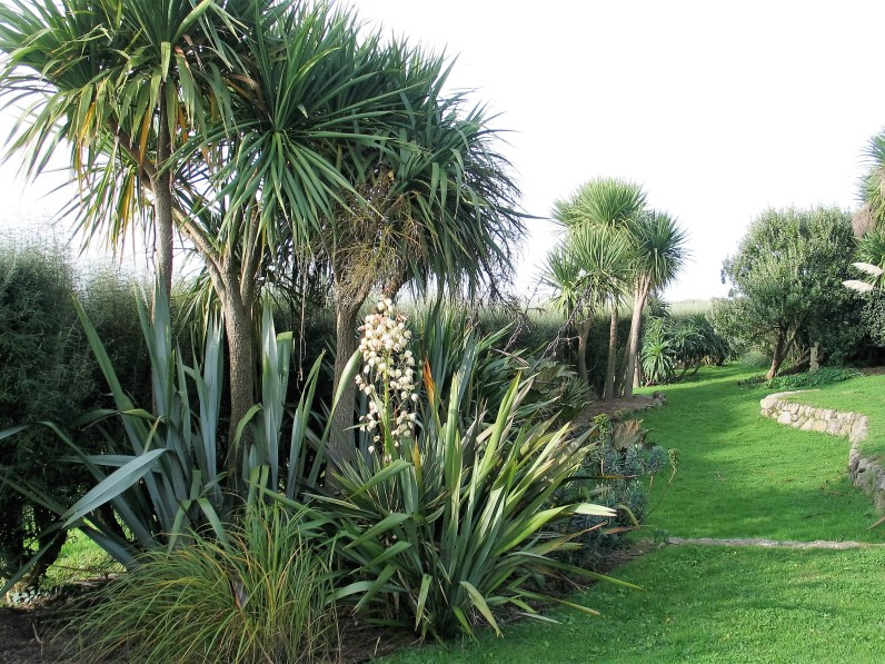 Yucca flowers on creamy spires and green grass paths
