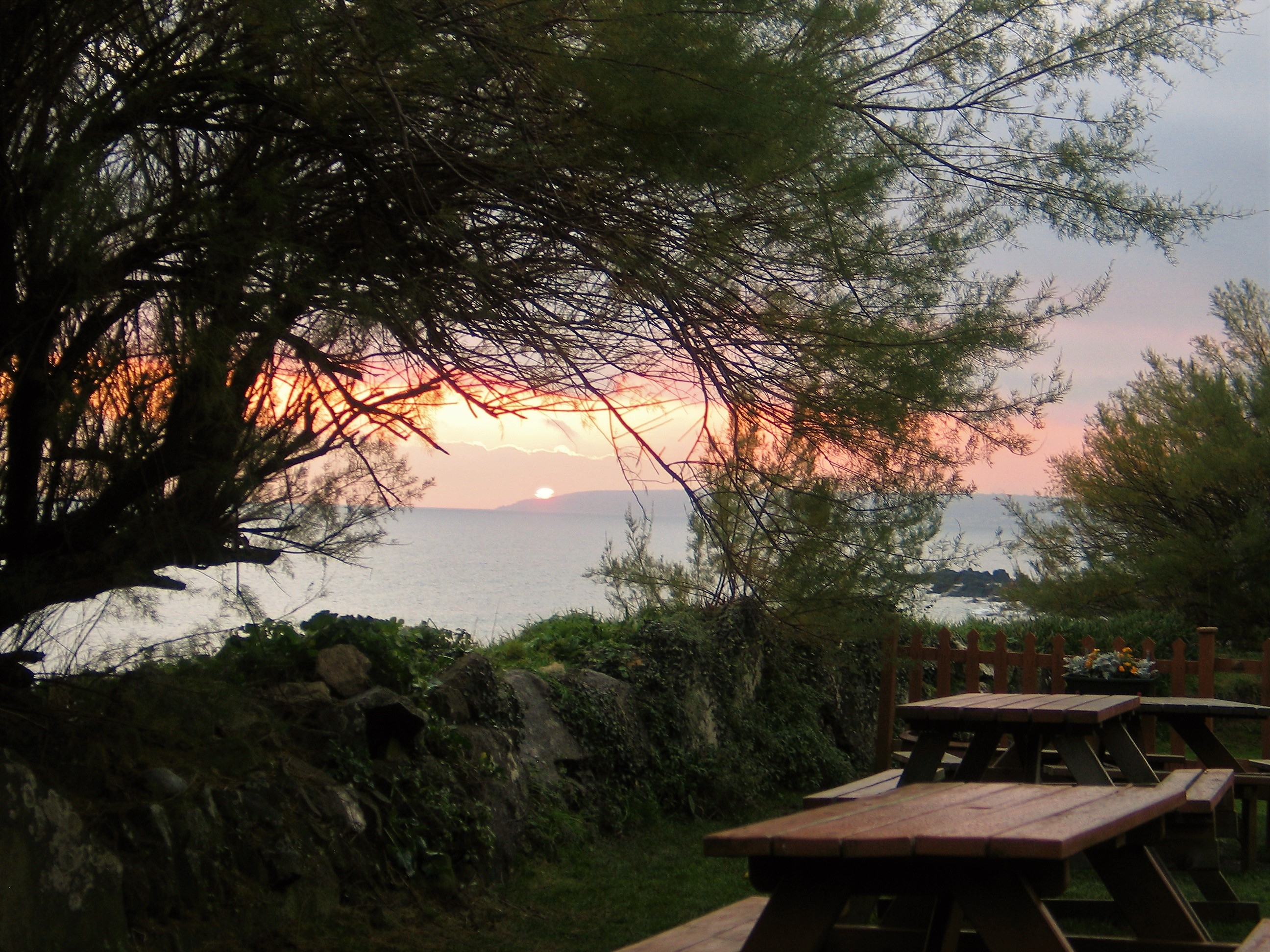 sunset over the sea framed by tamarisk from a beach cafe