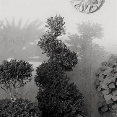 Twirled box topiary