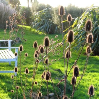 wild planting at the garden edges