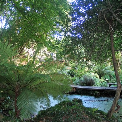 Trees and ponds