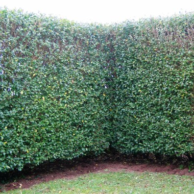 crisp righ angles in the hedges