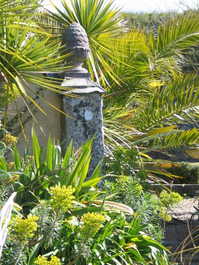 euphorbia and palms