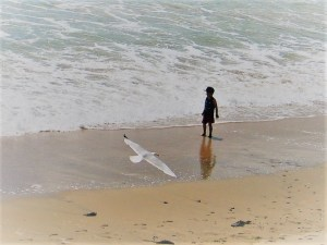 seagull and child - Praa sands