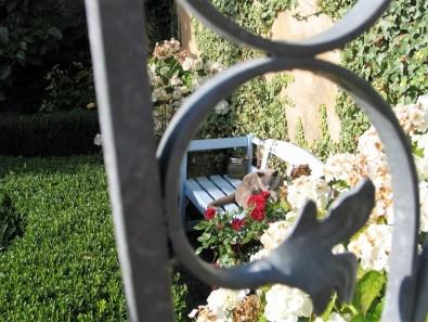 cat glimpsed through ornate gate
