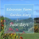 June Garden diary - sweep of lawn to sea views
