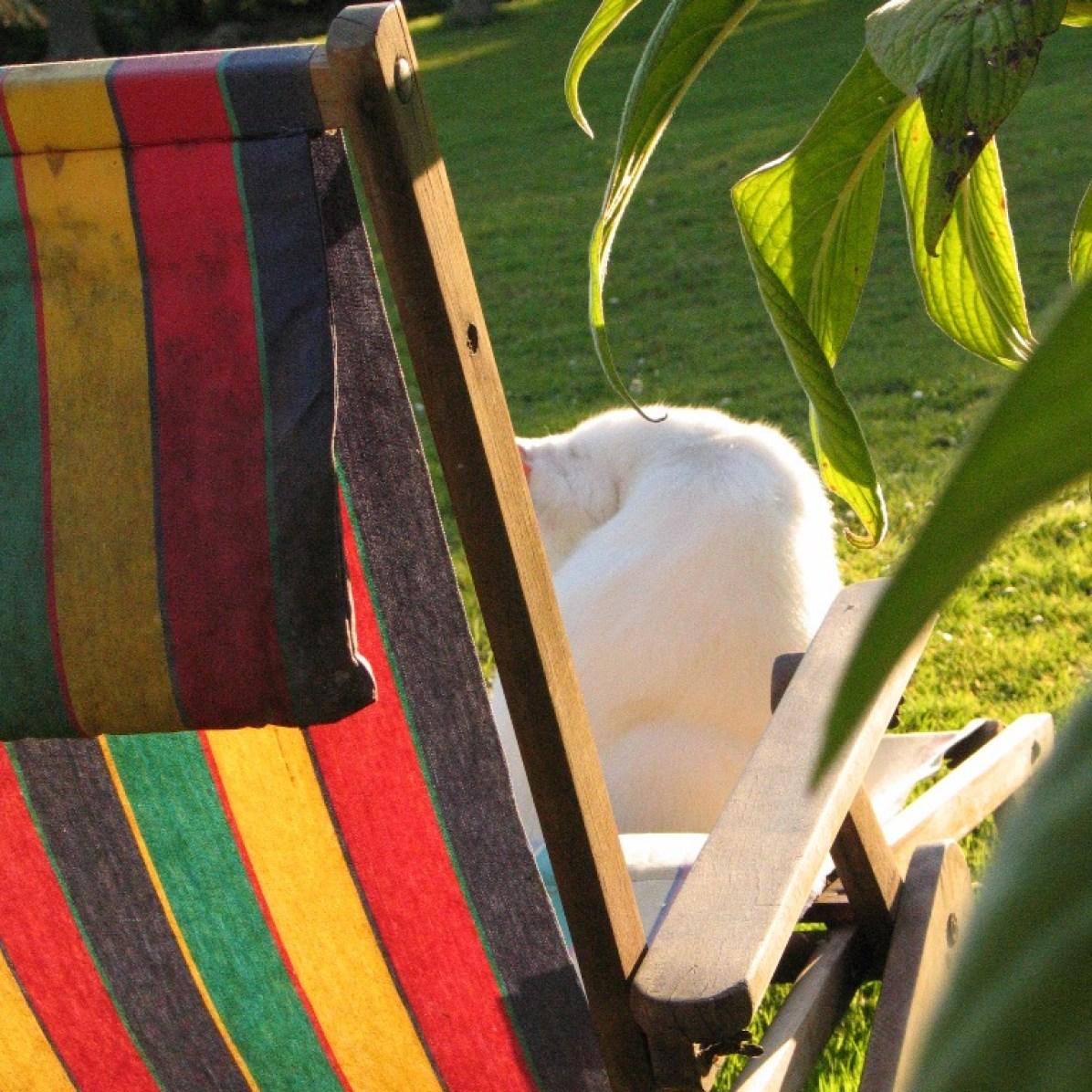 cat on summer deck chari