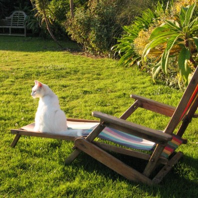 white cat lounging on deck chair