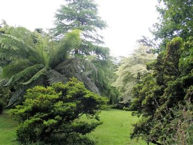 Specimen trees -t rewwiden garden