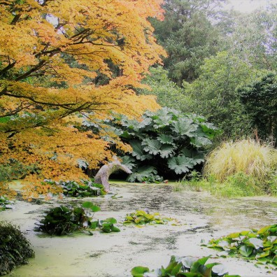 Tree edged pond