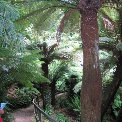 Path above Tree ferns - trewidden gardens