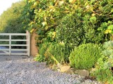 Box topiary and farm gate
