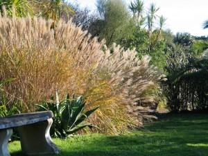 Golden grass n an autumn garden