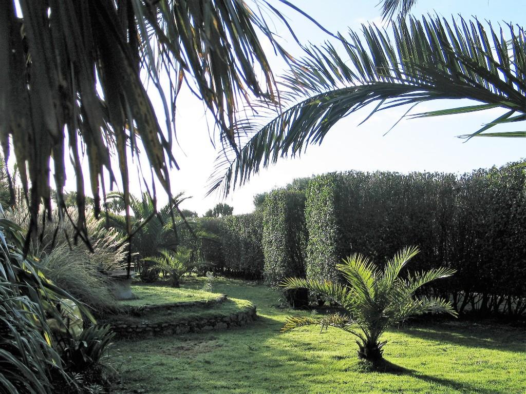 Early morning in a formal garden - garden escapes