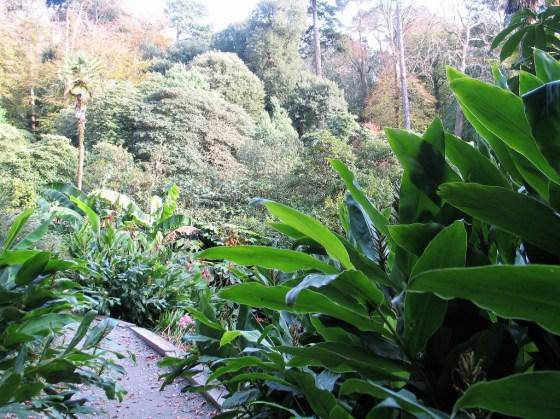 Banana trees above the valley
