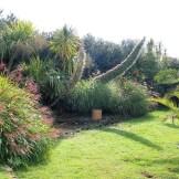 Echiums and grasses in a garden border