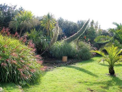 Echiums and grasses in a garden border