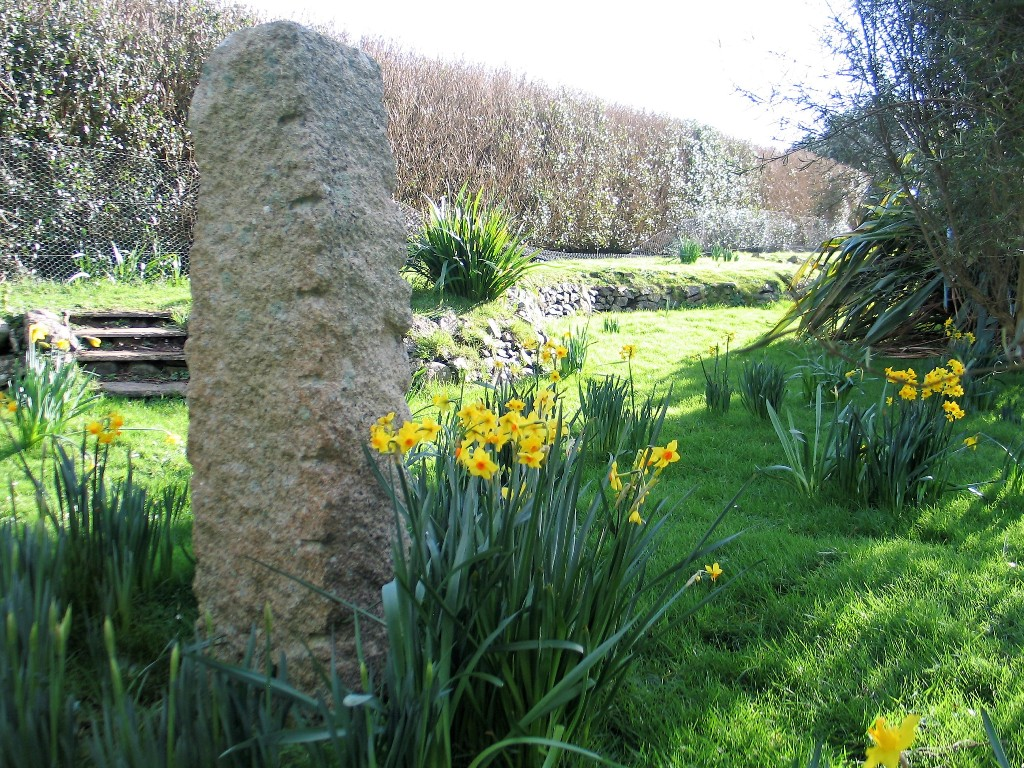 January brings spring daffodils