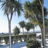 Cordyline-australis - snow in Cornwall