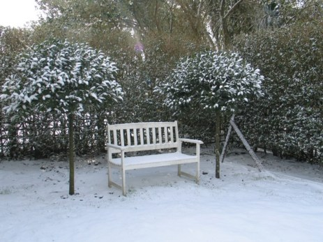 A bench flanked by standard bay trees in the snow