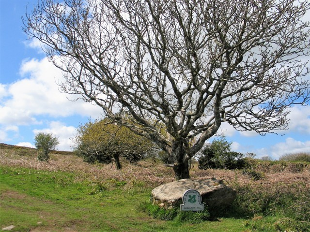 A gnarled tree and moss covered rock mark the entrance to Godolphin Hill