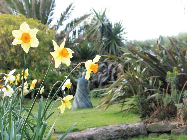 Spring celebration in the garden with fresh new growth - a statue glimpse through spring Narcissus