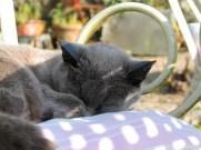 cast sleeping in dappled sunshine