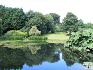 Trees reflected in a lake - bonython gardens