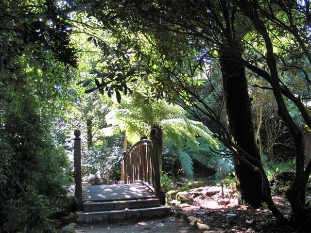A bridge under trees