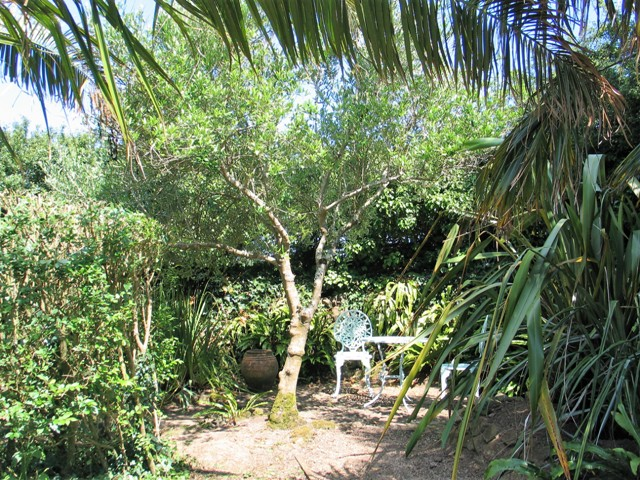 Mediterranean style Olive Trees - July garden Ednovean Farm