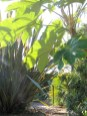 Lush July garden - heatwave