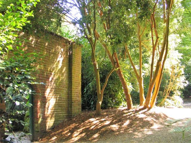 Mellow brick walls in golden sunshine - Trengwainton walled gardens