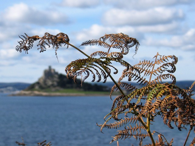 Bronze Autumn Bracken frames a view across the sea to St Michael's Mount