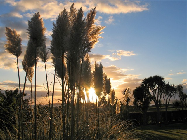 Pampass plumes at sunset - october garden