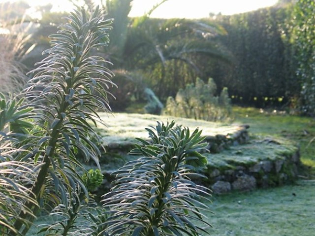 Frost - January garden - ednovean farm